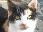 Adopt a rescued cat.....